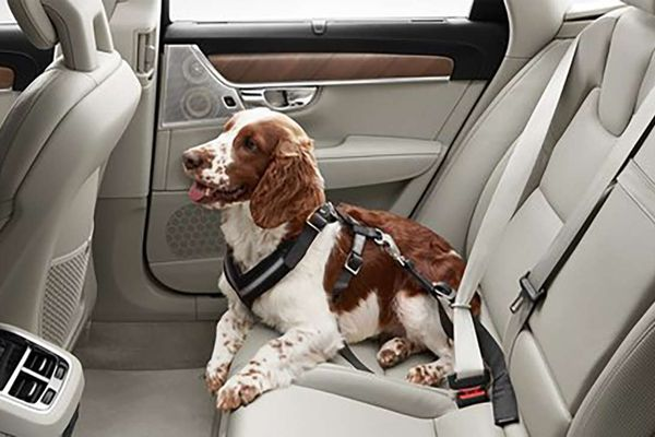 Pup my ride: The 10 best cars for dog owners, video