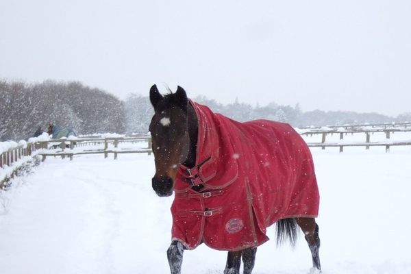 Please help feed the horses at The Racehorse Sanctuary this winter